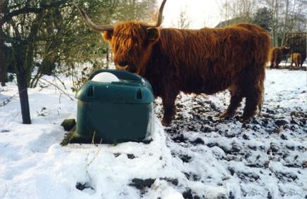 Вопросы организации зимовки мясного скота
